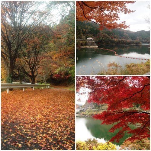 高瀬湖の紅葉