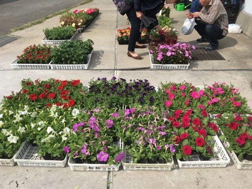 花の即売会
