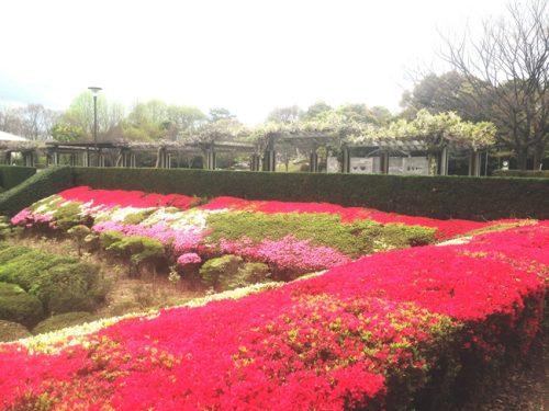 繚乱の花達